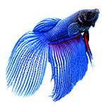 Wholesale Tropical Fish